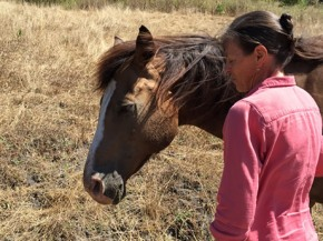 UC Davis Partners with The Connected Horse Project to Study Guided Horse Therapy for People with Dementia